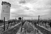Nierstein Vineyards 9