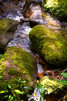 Mount Kinabalu Forest Stream 9