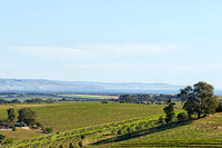 Samuel's Gorge vineyard, McLaren Vale, South Australia 2