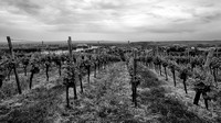 Nierstein Vineyards 5