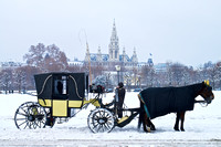 Horse and Carriage with Vienna Rathaus