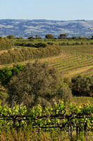 Samuel's Gorge vineyard, McLaren Vale, South Australia 1