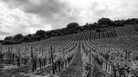 Nierstein Vineyards 2