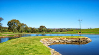 Lloyd Brothers vineyard pond, McLaren Vale, South Australia