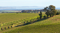 Samuel's Gorge vineyard, McLaren Vale, South Australia 4