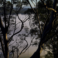 Mist through gums