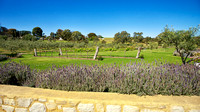 Lloyd Brothers vineyard and lavender, McLaren Vale, South Australia
