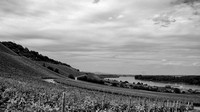 Nierstein Vineyards 1